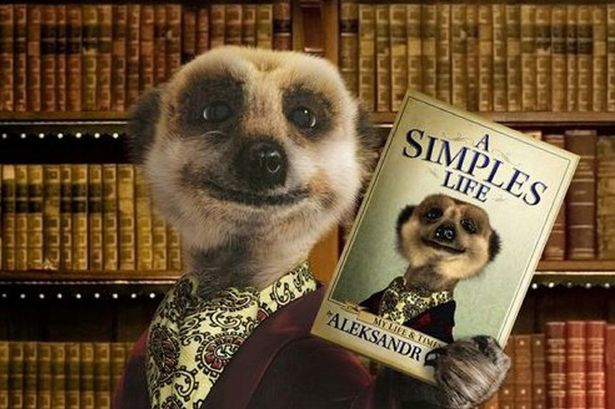 A shot from an insurance ad with a meerkat puppet who says