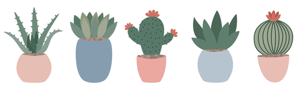 blog divider - picture of 5 cacti